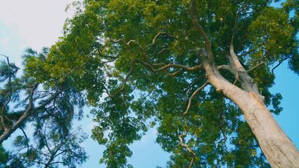 Lake and tree reflection