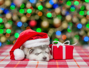 sleeping puppy  in red christmas hat with gift box on a background of the Christmas tree
