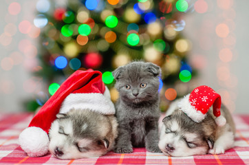 Cute kitten and sleeping puppies in Christmas hats on a background of the Christmas tree