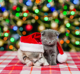 Kitten and sleeping puppy in red christmas hat on a background of the Christmas tree