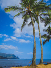 Palm Trees on Puu Poa Beach