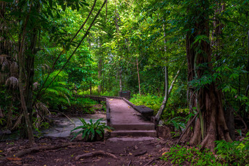 a path in a dense tropical forest in Krabi, Thailand - the path to the blue lake