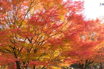 Autumn leaves of Kiyosumi Park / Kiyosumi Park is adjacent to Kiyosumi Garden in Koto Ward, Tokyo, and you can enjoy it free of charge.