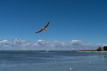 Möwe mit ausgebreiteten Flügeln fliegt über das Wasser mit Wolken im Hintergrund