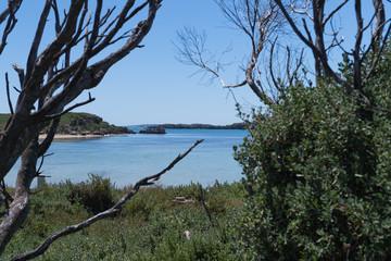 Blick durch Bäume und Gebüsch auf eine ruhige Bucht