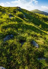 grassy slope of mountain in summertime. lovely nature background