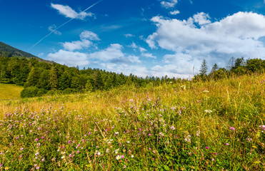 grassy meadow with wild herbs near the forest. beautiful nature summertime scenery in mountainous area