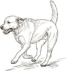 sketch of a running retriever