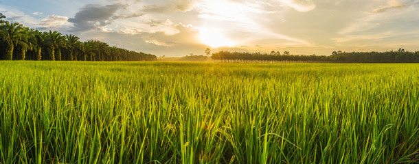 Acrylic Prints Village Rice field with sunrise or sunset in moning light