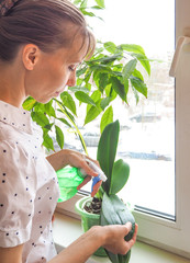 Caring for orchids in the winter. Cleaning the leaves of houseplants.