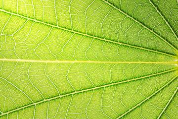 Textured background green leaf
