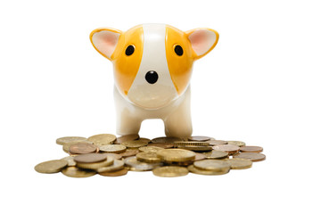Ceramic dog bank with coins isolated on white background.