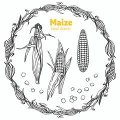 Maize vector hand drawn illustration