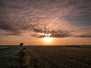 Lever de soleil sur les vignes d'Anjou