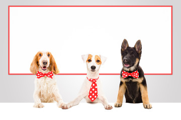 Three funny office dogs on the background of a big banner
