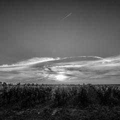 Lever de soleil sur les vignes, laissant apparaitre un vol long courrier tout en haut