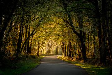 Route de campagne recouverte de verdure au coucher du soleil