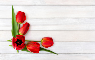 Beautiful red tulips on background of white painted wooden planks with space for text. Top view, flat lay