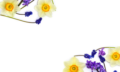 Narcissus, hyacinths and flowers muscari on white background with space for text. Top view. Flat lay.