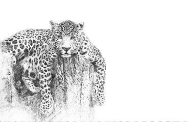 Wall Mural - Leopard. Sketch with pencil