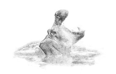 Hippo. Sketch with pencil