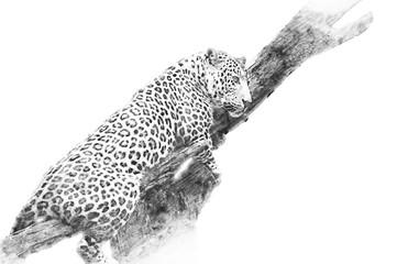 Leopard. Sketch with pencil