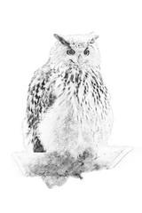 Owl. Sketch with pencil