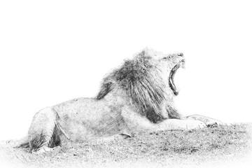 Lion. Sketch with pencil