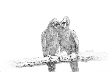 Parrot. Sketch with pencil