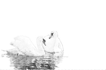 Swan. Sketch with pencil