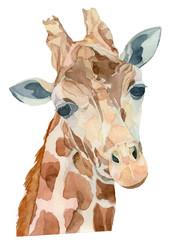 Watercolor Portrait of a giraffe