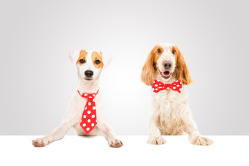 Two attractive business dogs in the ties