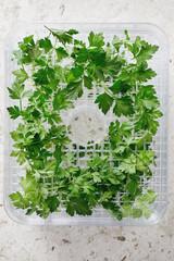 Fresh parsley on dehydrator tray.