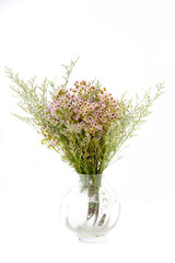 bouquet of flower on glass vase on white isolated background