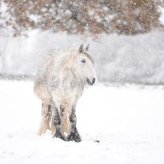 padający śnieg i koń - fototapety na wymiar
