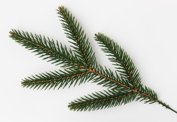 Christmas tree branch on white background closeup