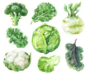 Watercolor Set of Variety Cabbage