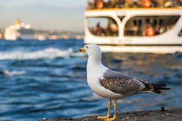 Passenger ferry ship on the Gulf Golden Horn, seagull standing on stone.