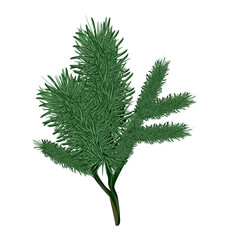 Christmas tree branch, vector isolated illustration, new year, christmass