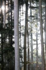 sun shining through fog in the forest