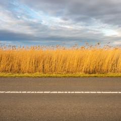 Straße Schilf und Himmel am Neusiedlersee im Burgenland