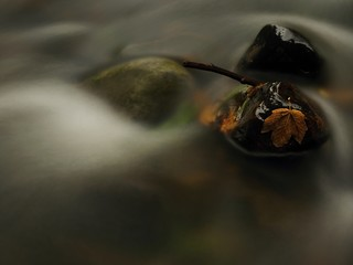 Autumn river. Death yellow maple leaf on basalt stone in cold water of river