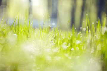 Blurred background with green grass
