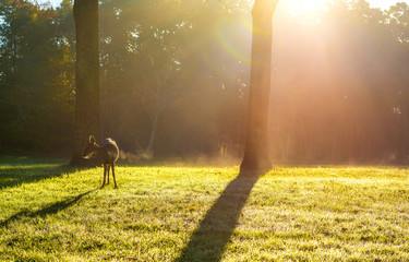 Lovely deer hanging out under the sunlight on cold morning