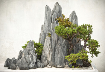 Tuinposter Bonsai Chinese bonsai, located in Suzhou City, Jiangsu Province, China.
