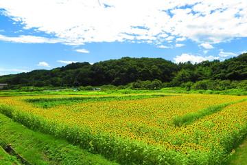緑と花の田舎の風景16
