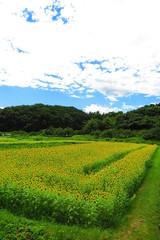 緑と花の田舎の風景15