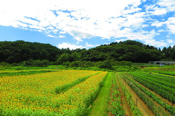 緑と花の田舎の風景14