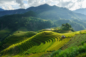 Printed roller blinds Rice fields Terraced rice field in harvest season in Mu Cang Chai, Vietnam. Mam Xoi popular travel destination.