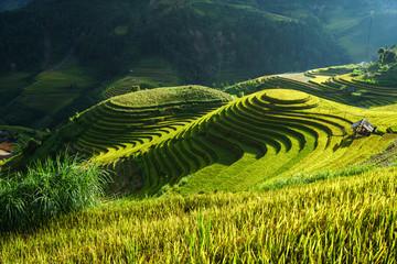 Papiers peints Les champs de riz Terraced rice field in harvest season in Mu Cang Chai, Vietnam. Mam Xoi popular travel destination.